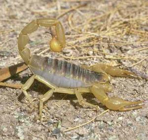 龙丰源蝎子养殖