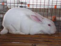 盛大兔业养殖