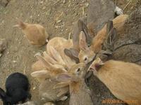 盛大兔业养殖加盟