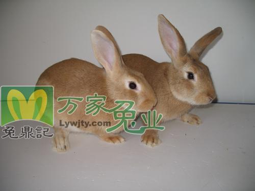 万家兔业养殖加盟