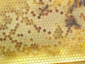 瑶圆蜂蜜加盟